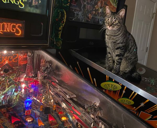 The Pinball Charity Experiment